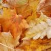 Fall Season Marketing Update